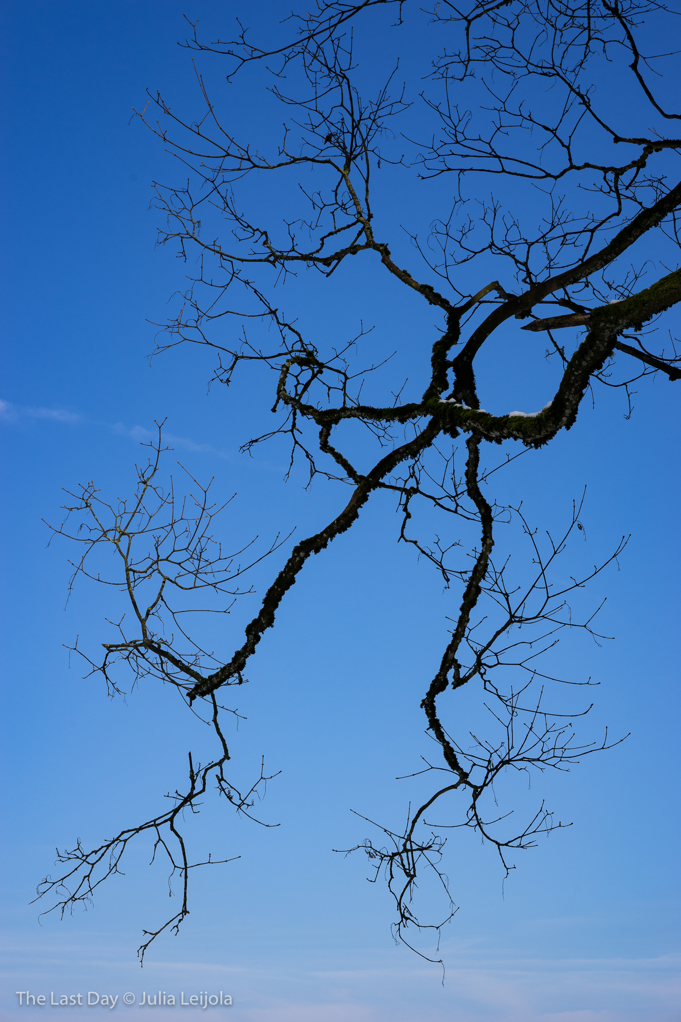 Silhouette of a large branch on a deep blue sky.